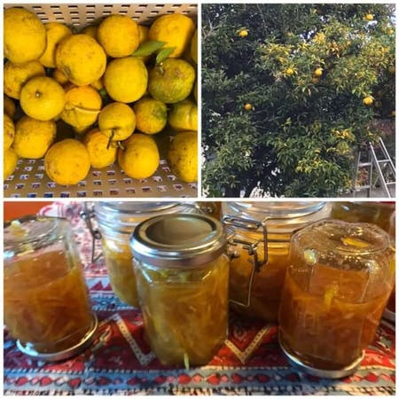 Harvesting naturally grown Yuzu and making Yuzu tea in the countryside of Kyoto\r\nAvailable time from November to January